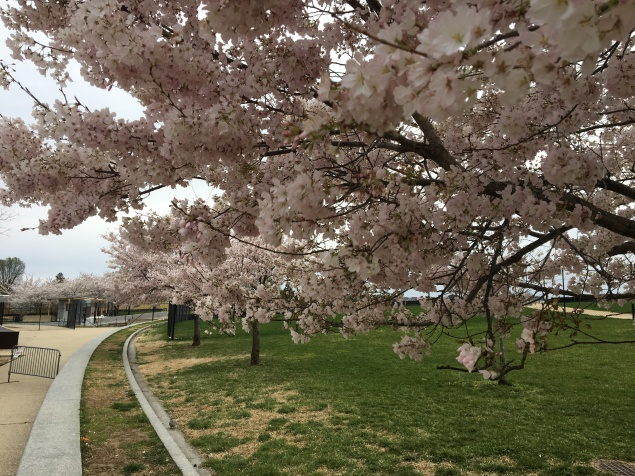 Peak cherry blossom bloom was a huge plus!
